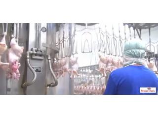 دجاج برازيلى للبيع باعلى جودة واقل سعر